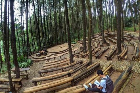 Destinasi Tempat Wisata Terhits Di Jogja - Hutan Pinus Imogiri
