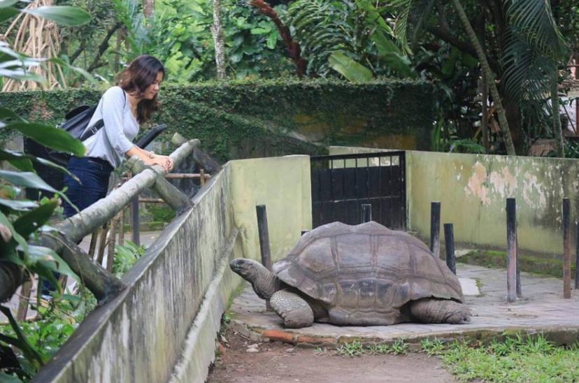 Destinasi Tempat Di Jogja - Kebun Binatang Gembira Loka