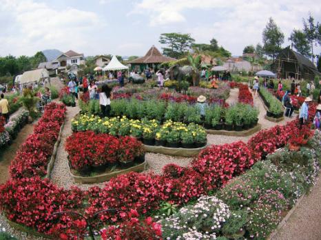 Taman Begonia - Wisata Lembang